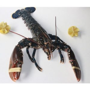 bogavante azul comprar pescado online oviedo